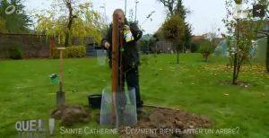 comment_bien_planter_un_arbre